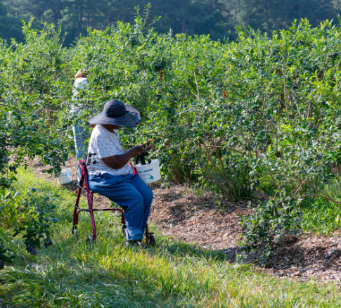 blueberry pickers-9910.jpg
